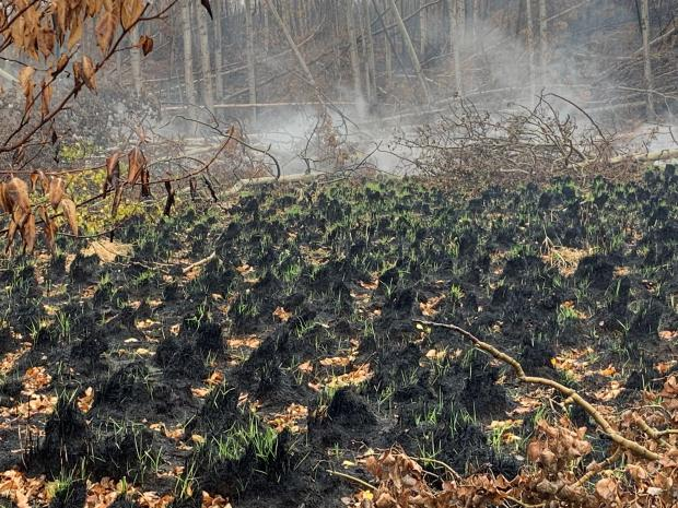 Green grass shoots are seen on the black burned ground with smoke in the background.