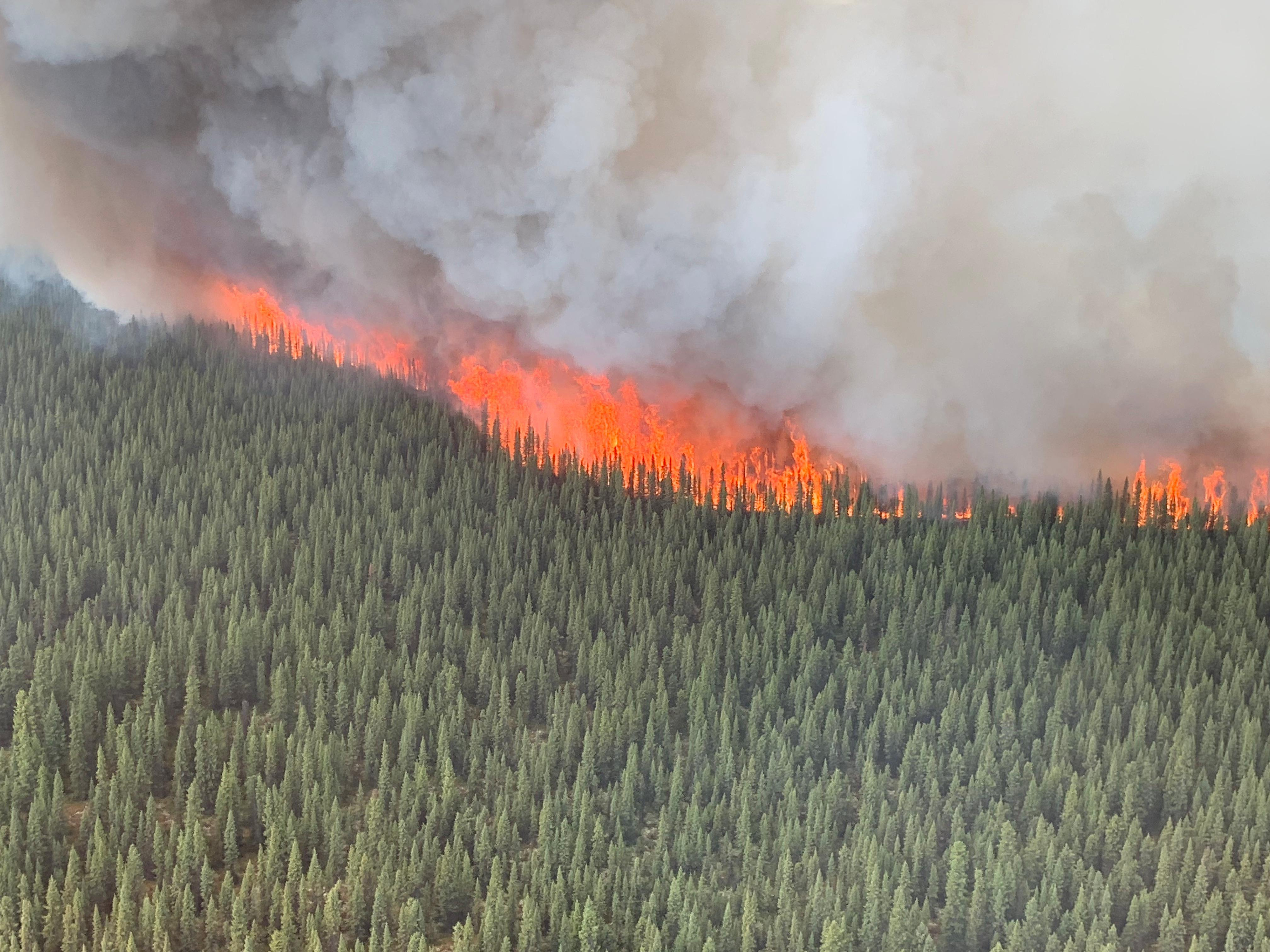 Swan Lake Fire Burning in Black Spruce Forest