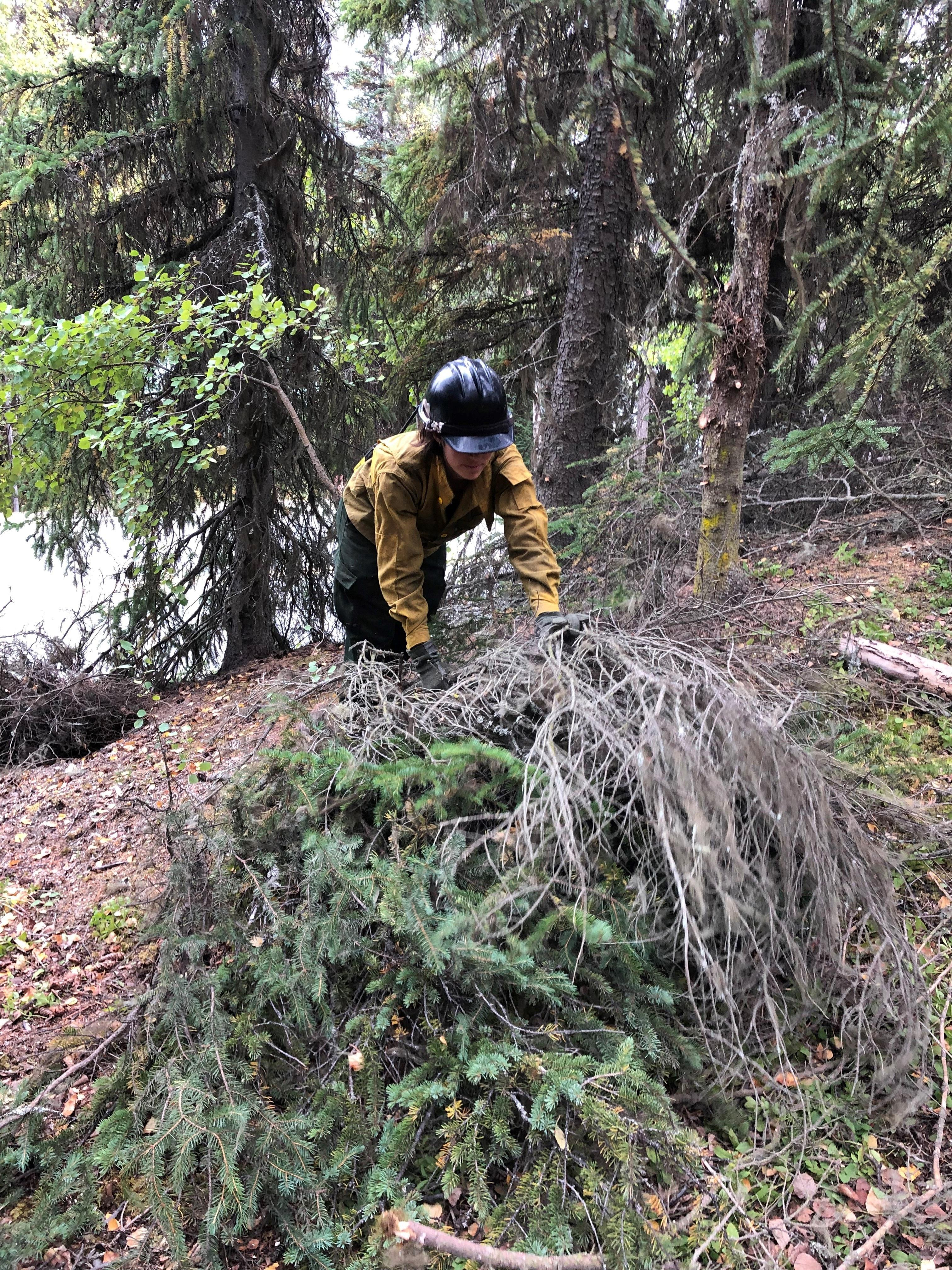 Sept. 1 - A firefighter in protective great pulls cut tree limbs to stack on a hillside.