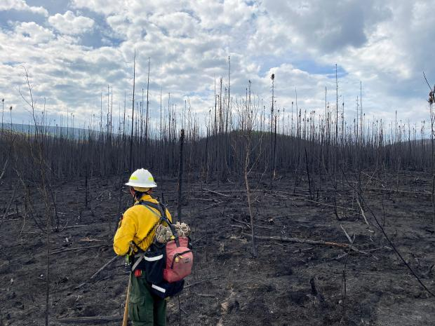 Photo shows Safety Officer Matthew Martin standing in full PPE (yellow nomex shirt, green nomex pants) looking out over a completely burned area of black spruce trees. Isom Creek Fire, June 13, 2020