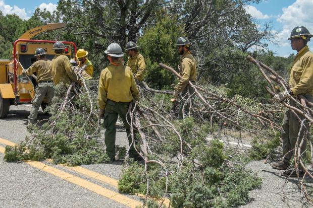 A daytime photo of seven firefighters in yellow shirts and hard hats stand on a road holding clumps of tree limbs as tall as a person, ready to be placed in a chipper. Pine trees of the Apache-Sitgreaves National Forest are in the background.