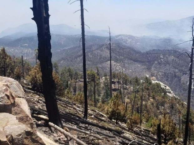 meadow trail trees burned
