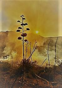 Photo of vegetation with smoke in the background