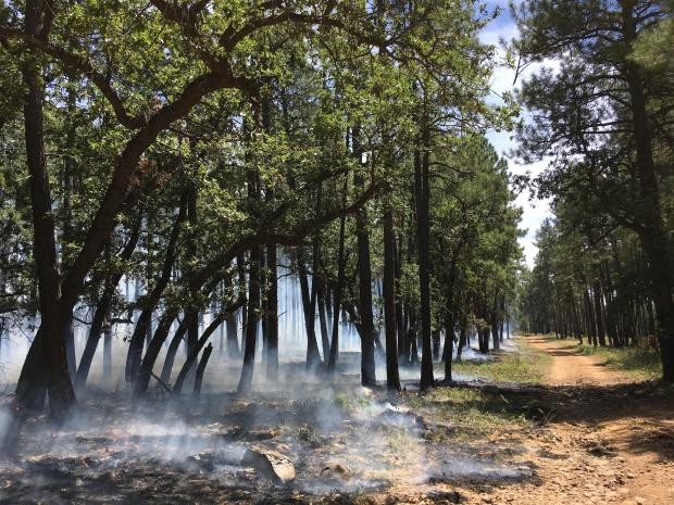 Ignitions along a control line 8-17-19