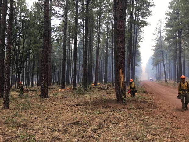 Firefighters conducting ignitions to secure control lines on Sept. 18, 2019