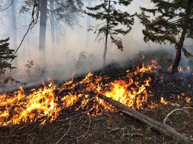 Fire moves across the ground through dead pine needles August 23, 2019