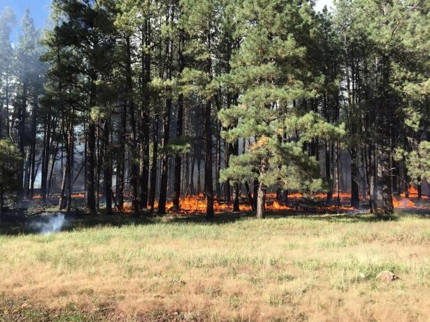 Ground Fire in Thicket