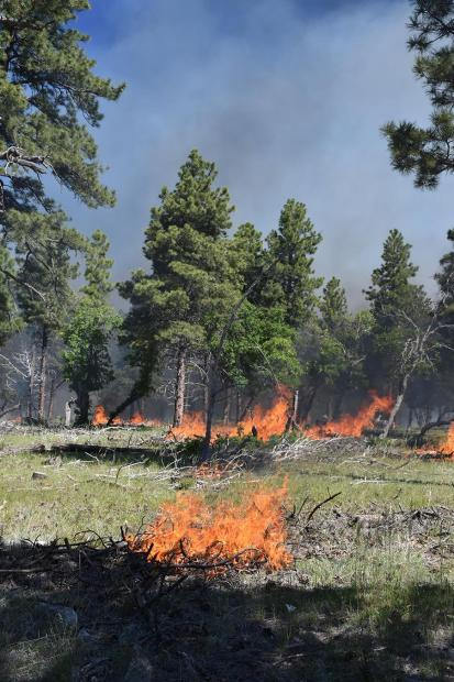 Initial fire ignitions on dead & down trees
