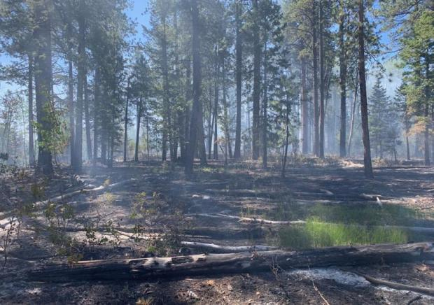 Light smoke lingers over an area through which the Castle Fire recently burned. Photo taken July 17, 2019, by Dave Veater. Credit the Kaibab National Forest.