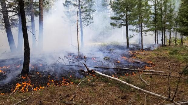 A low intensity surface fire creeps through mixed conifer forest.