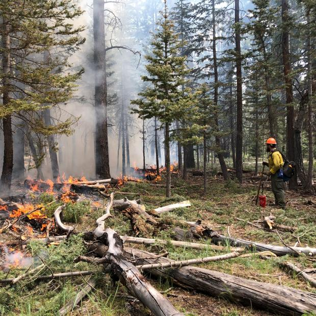 A firefighter stands to the right side of the picture monitoring while dead and down logs burn on the left side. .