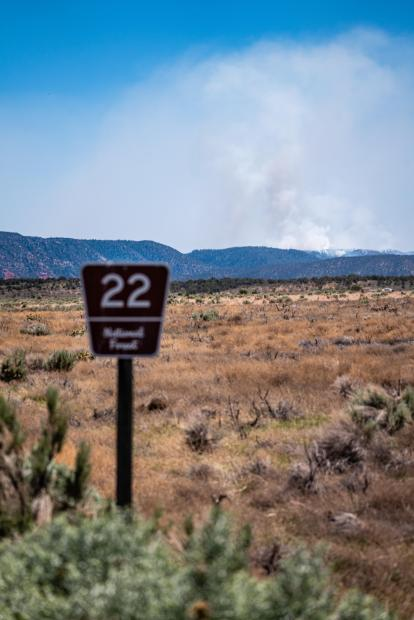 Smoke column from Mangum Fire behind FS22 Road sign on June 9, 2020. Photo by C.J. Adams. Credit Kaibab National Forest.