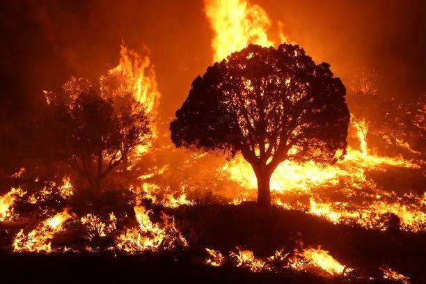 Pinyon Juniper trees in flames photo taken by McCall Smokejumpers