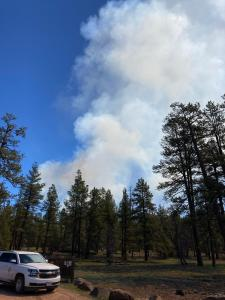 View of smoke rising above trees