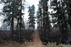 Good black on the ground on both sides of the road after the fire moved through. 7-14-21. Photo by Dyan Bone. Credit the Kaibab National Forest.