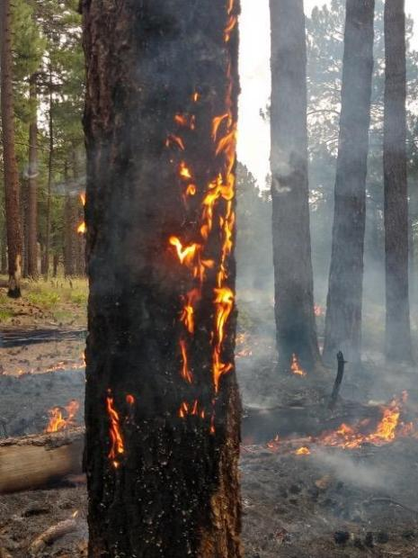 Standing in the shade in pine forest, orange fire is visible in a faint line across the pine needles on the forest floor.  The nearest tree has some flame in the bark along the lower trunk.