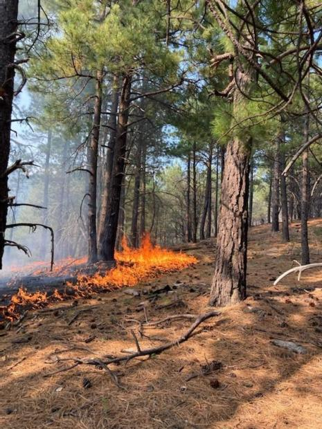 standing in a fores with pine needles on the ground, a line of orange fire is seen near by