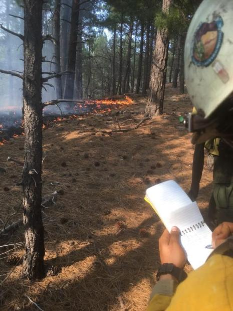 Firefighter in a yellow shirt and white helmet writing in a small notebook while standing in the forest.  A line of orange fire on the forest floor is visble in the distance.