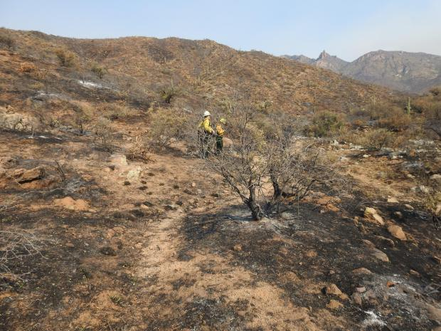 Two BAER team members work on the ground collecting field data, burned hilly area with one Saguaro cactus visible.