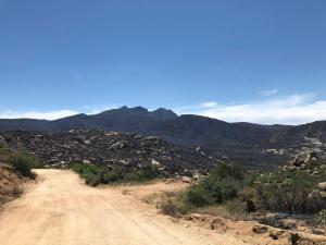 Photo of the Bush Fire area showing both burned and unburned areas