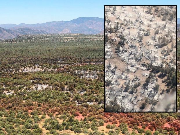 The desert landscape is colored with redish retardant lines and has an inset picture of what the burned area looks like close up with gray soil and some live trees remaining