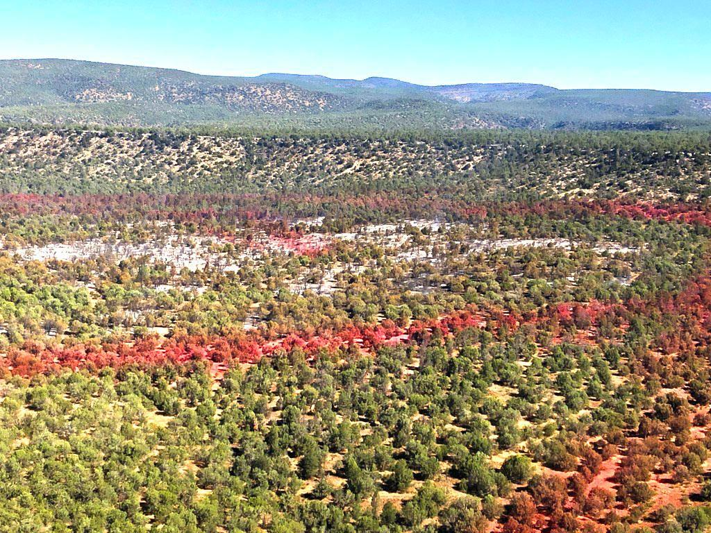 This is an aerial view of the pinon and juniper landscape painted in several directions by retardant which appears to be a reddish color. The retardant appears in indistinct lines as dropped from firefighting aircraft.