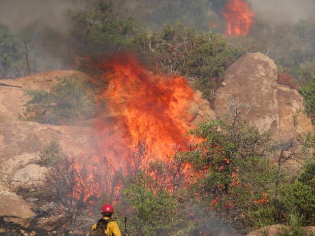 A firefighter with burning vegetation during a burnout operation in the Oak Flat area on the Telegraph Fire.