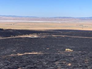 Overview of grass that burned by the Bend Fire