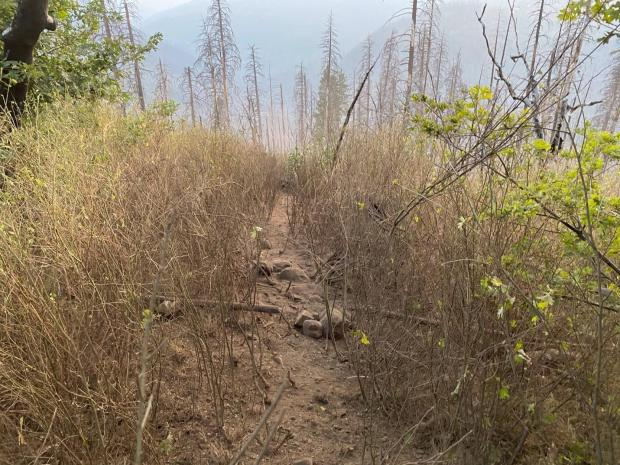 After picture showing effectiveness of Fireline Explosives in creating a gap in vegetation and exposure to mineral soil