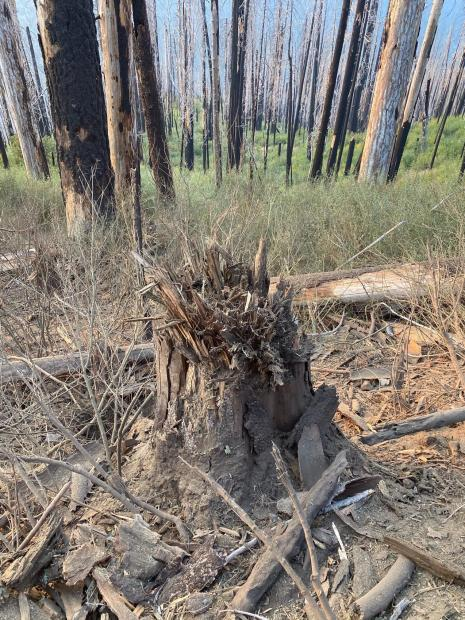 After photo showing effect to tree stump and surrounding brush