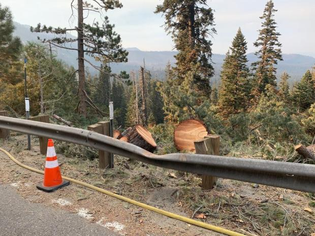 A guard rail dented with a fallen tree next to along a paved road.