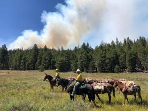 Cow Fire smoke column and packing mules traveling to the fireline
