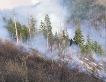 Image of smoke in timber from above the fire