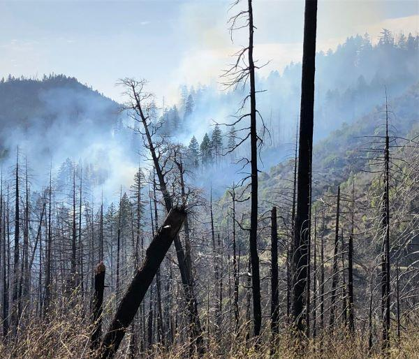 Image of the fire burning in dead trees from previous fires