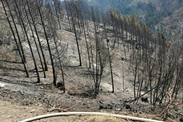Picture of a hoselay and the Elk Fire