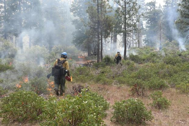 Firefighters use driptorches to perform ignitions in conifer woodland and manzanita.