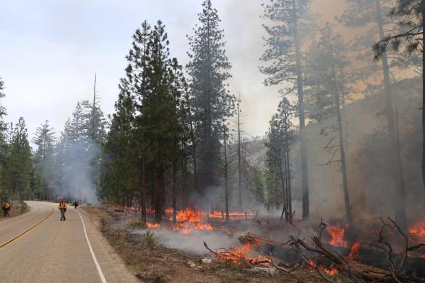 Firefighters walk and stand on roadway bordering fire burning in down wood and vegetation.