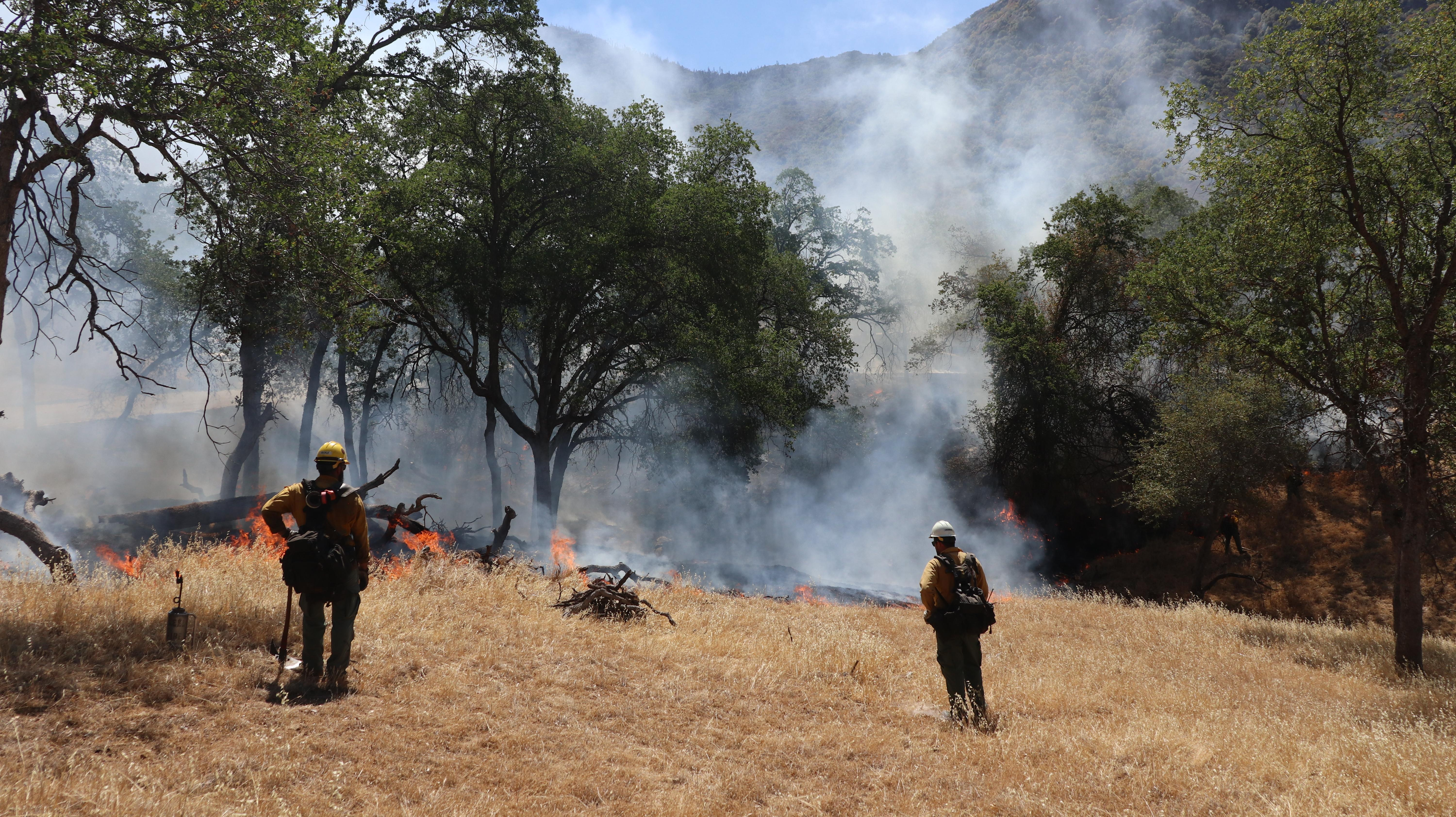 Two fire mangers watch small flames burn through dead and down grasses with oak trees remaining.