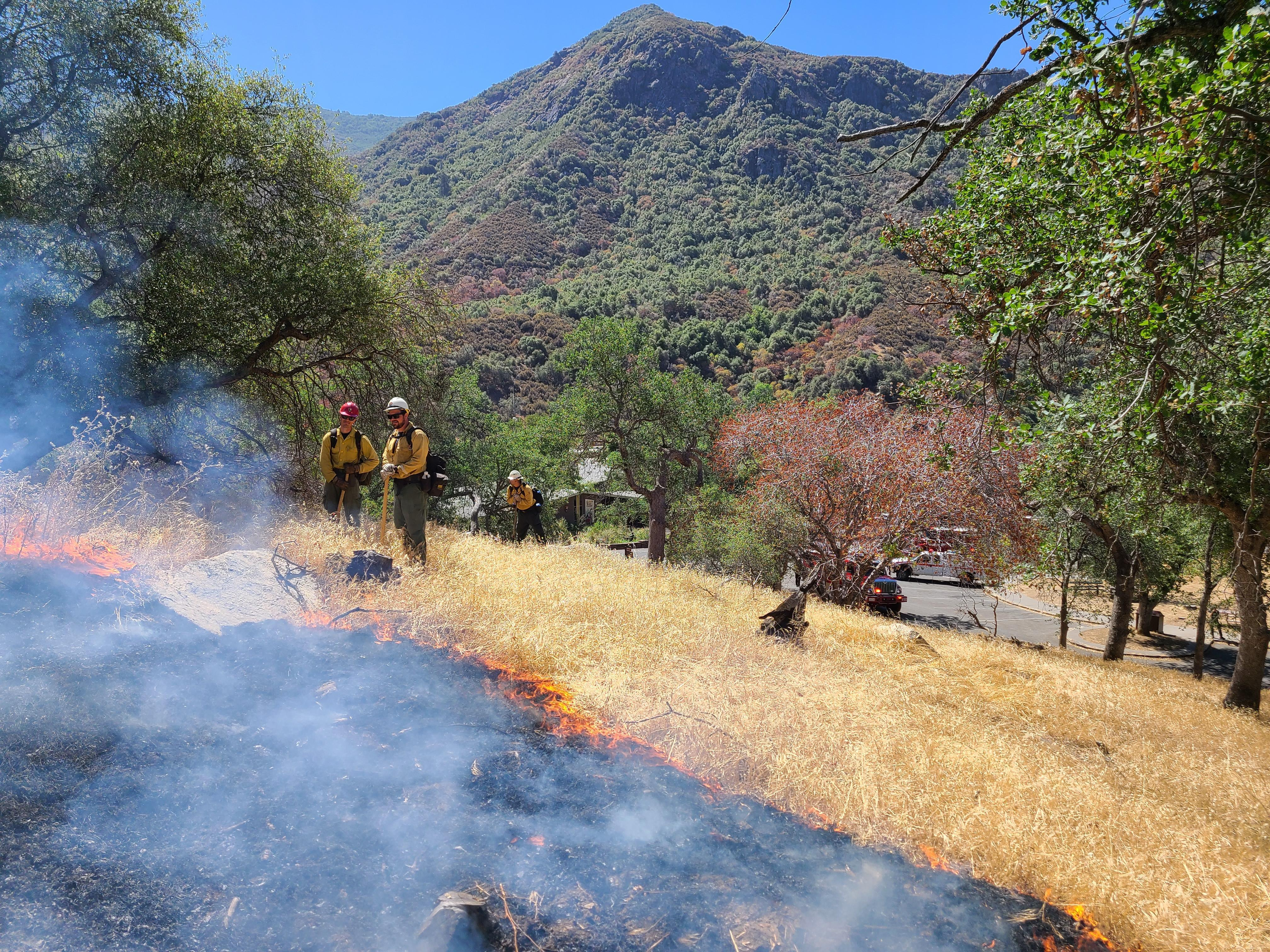 Low intensity flames burn through dead grass on a hillside with a mountain peak in the distance.