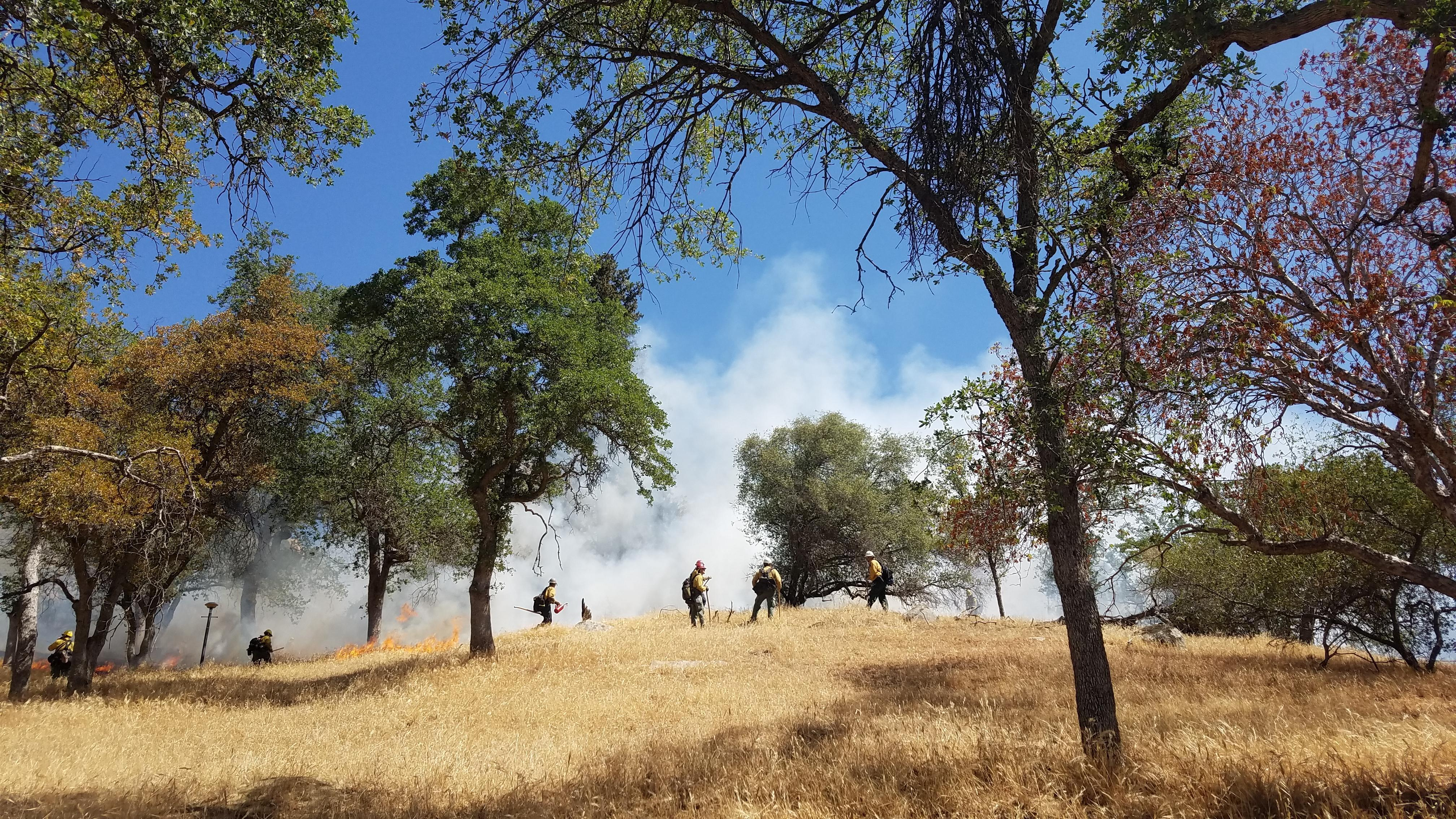 Firefighters stand on a brown grassy hill with scatter oak trees with smoke risking above them with.