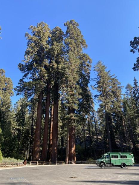 A green fire truck parked in an empty lot in front of multiple large red sequoia trees