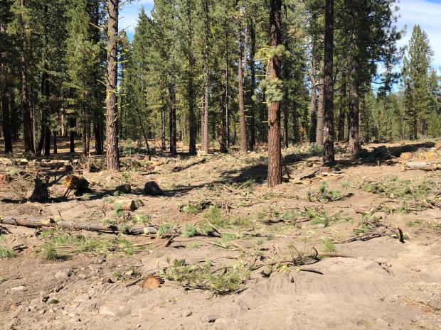 Limbs and branches are strewn across the ground in front of a section of forest