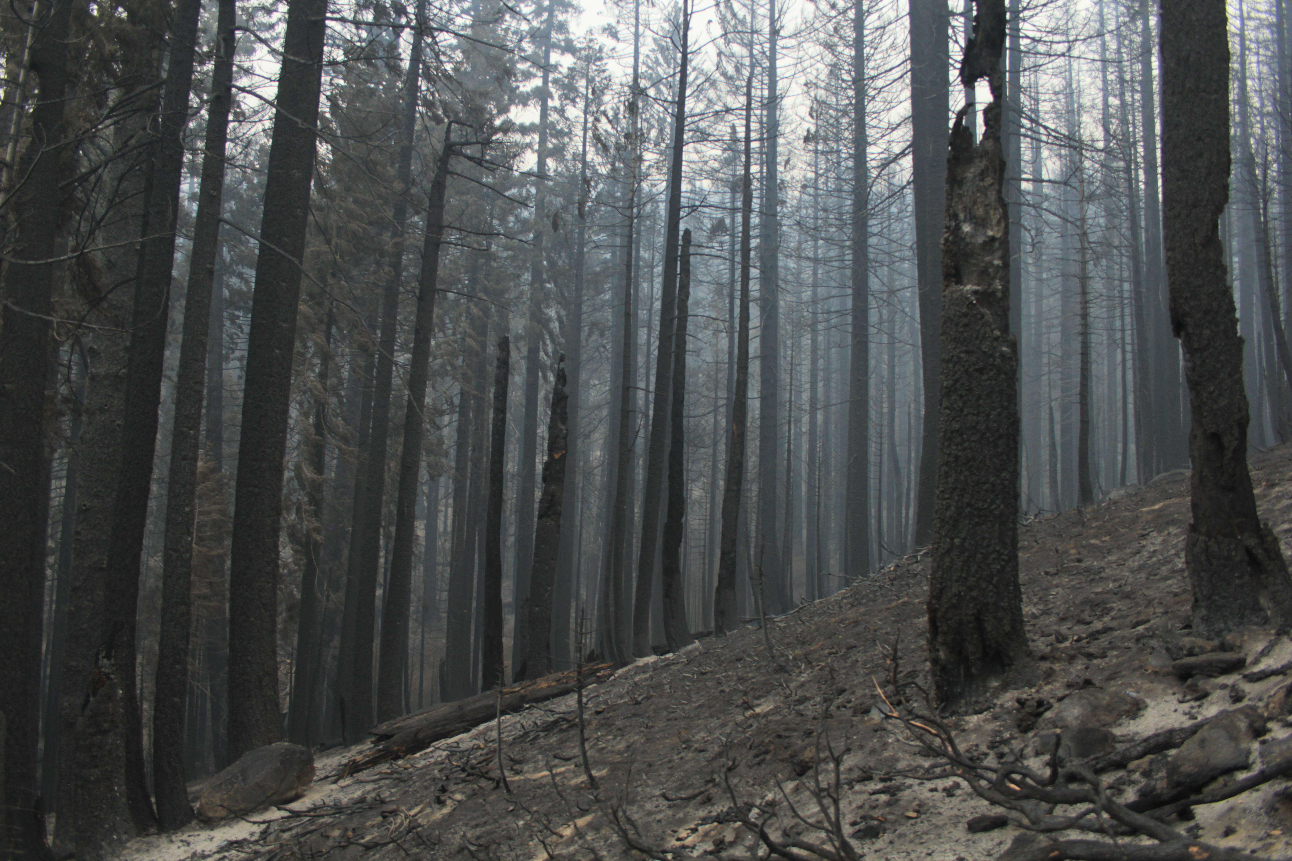 Burned trees and a ground covered in ash.
