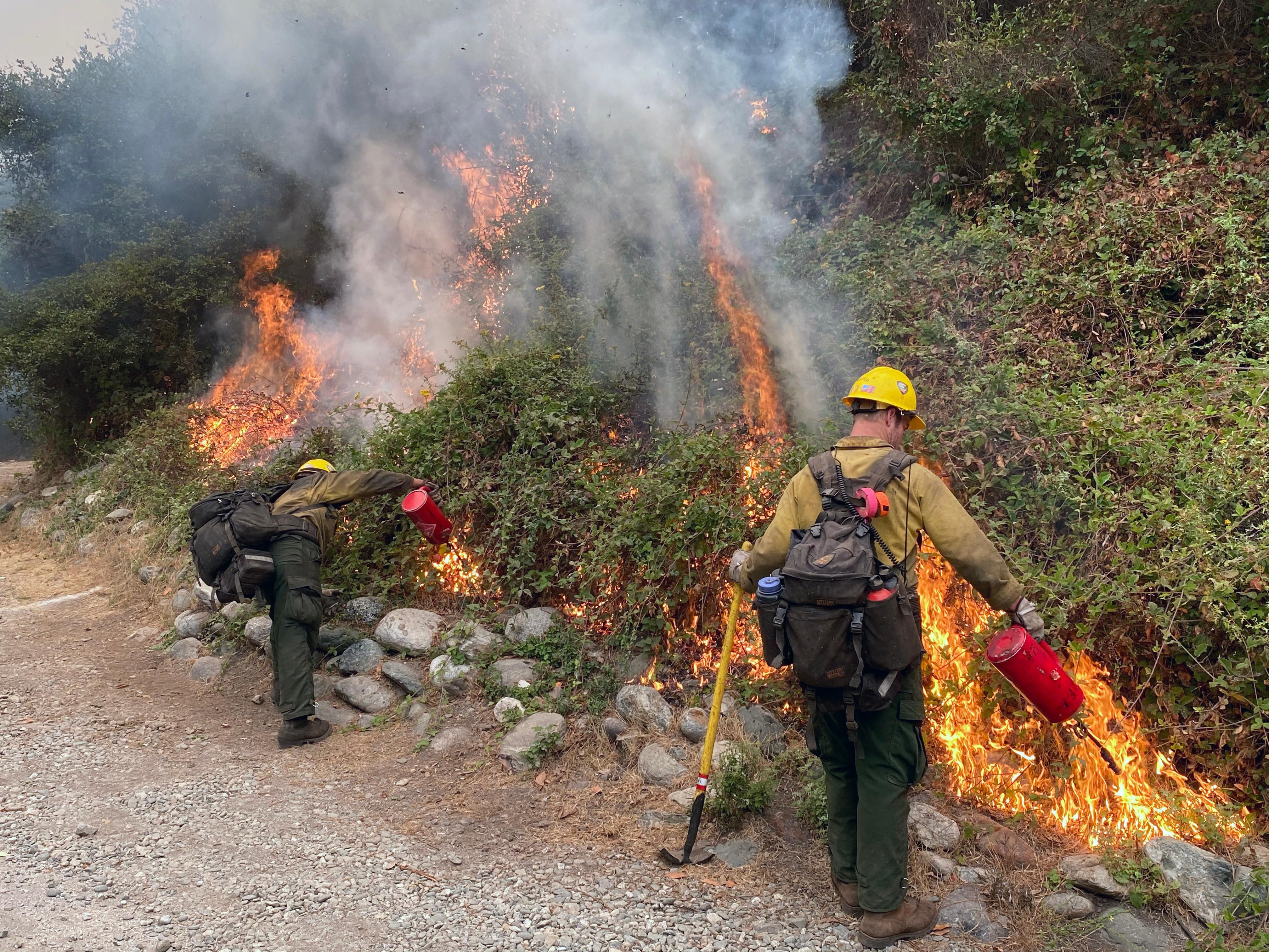 Firefighters burn vegetation along a road to create a stronger fire line at Limekiln State Park.