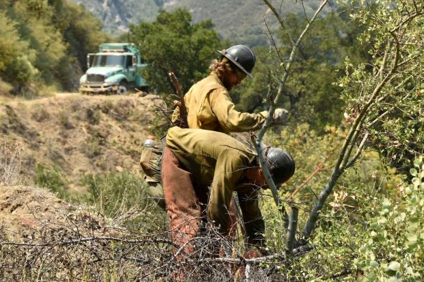 Firefighters working to clear vegetation at the Willow Fire