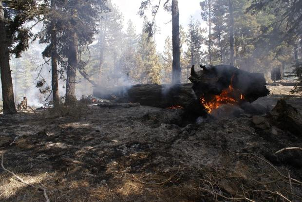 A large tree trunk burning on the ground