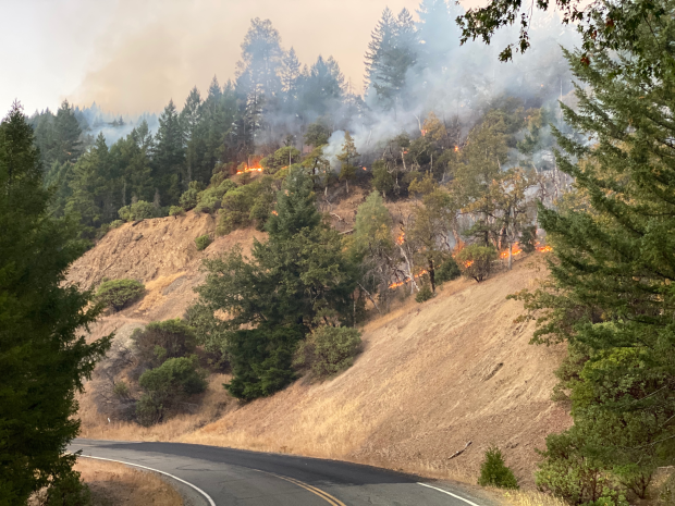 Small flames move gently down a sparsely forested hillside, burning grasses on the ground while leaving trees unburned.