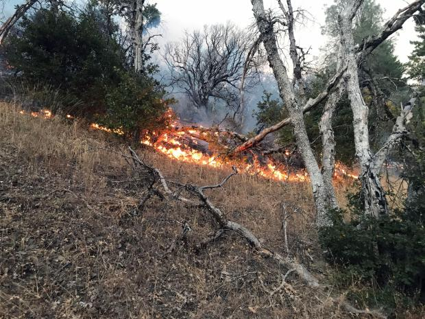 A line of fire, burning downhill through grass but underneath some overhanging trees.