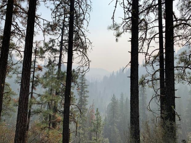 A viem from an overlook through tall trees, showing a smokey haze in the distance.