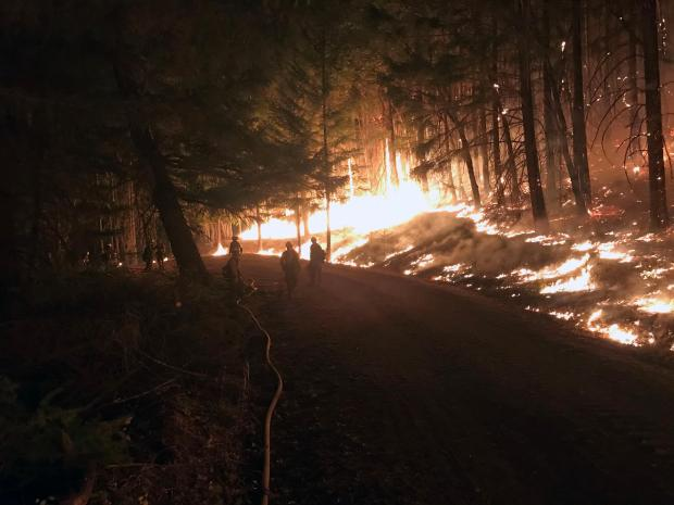 Fire is shown burning at night along a road in a forest. The trees canopies are not on fire but the grass and brush underneath has been burning.